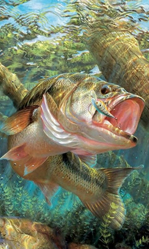 Bass Art Fish Wallpaper Fish Bass Fishing