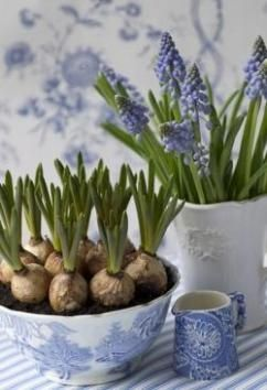 Spring Floral Decor ~ Grape Hyacinth