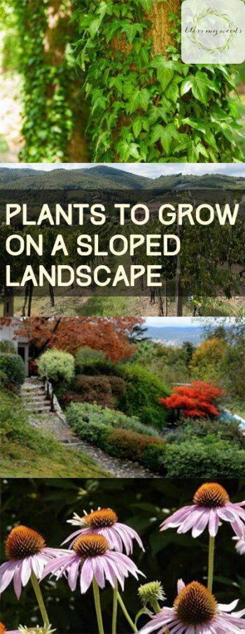 Plants to Grow On a Sloped Landscape #landscapingtips