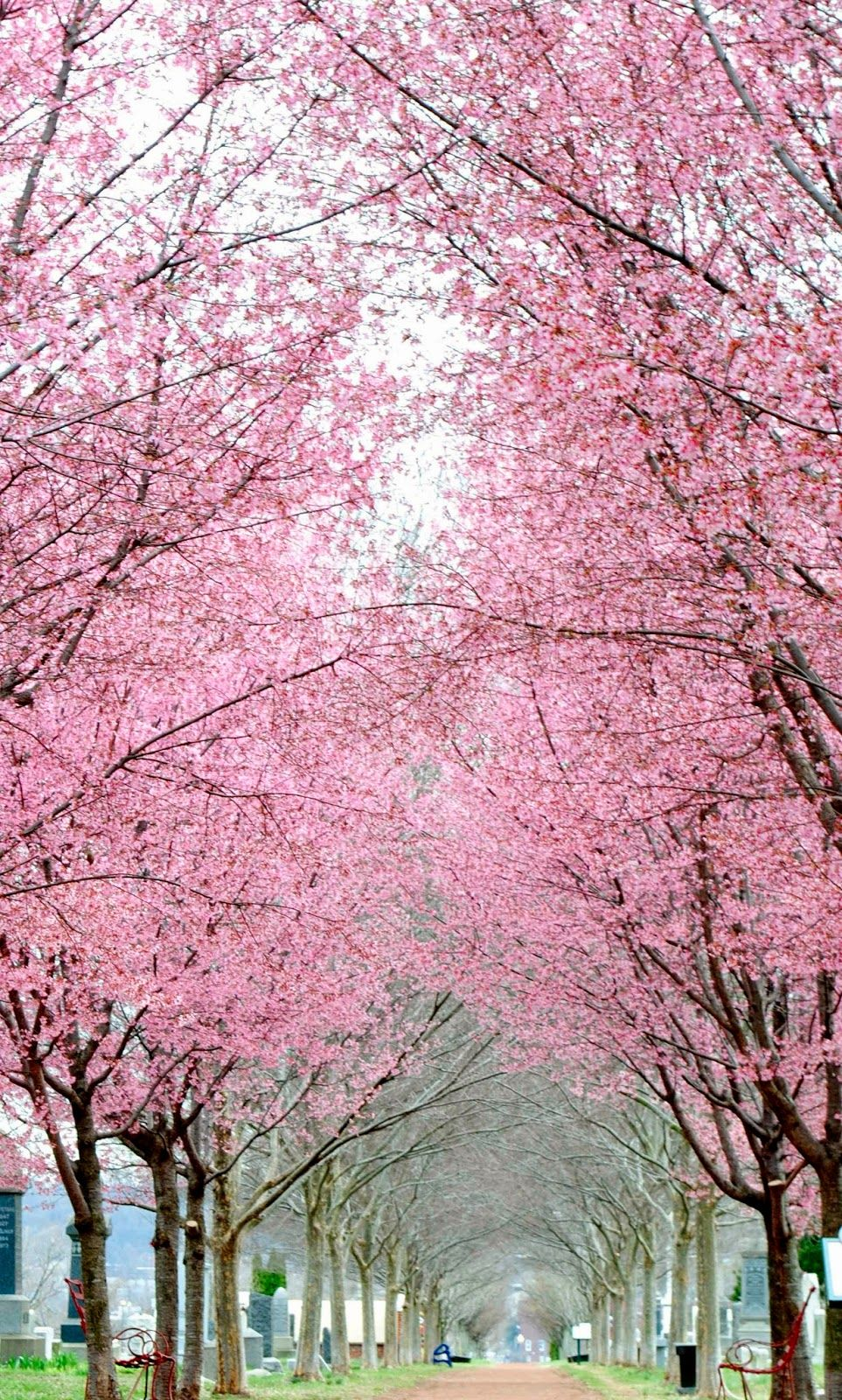 The Nomadic Wanderings Of Two Humans And One Dog Flowering Trees Beautiful Nature Beautiful Places