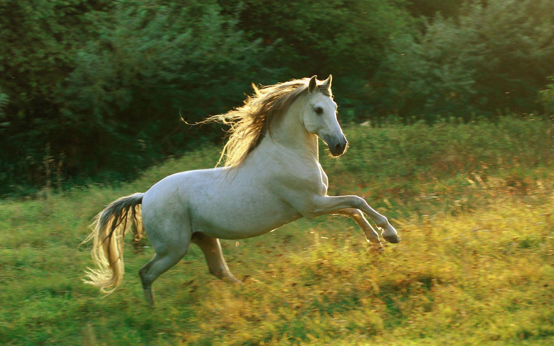 Fantastic Wallpaper Horse High Definition - ea6e800e0009cd290334f069bd78cc7f  HD_693249.jpg