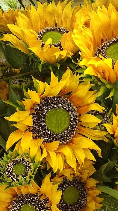 Sunflower Print Canvas Framed Or On Acrylic Sheets