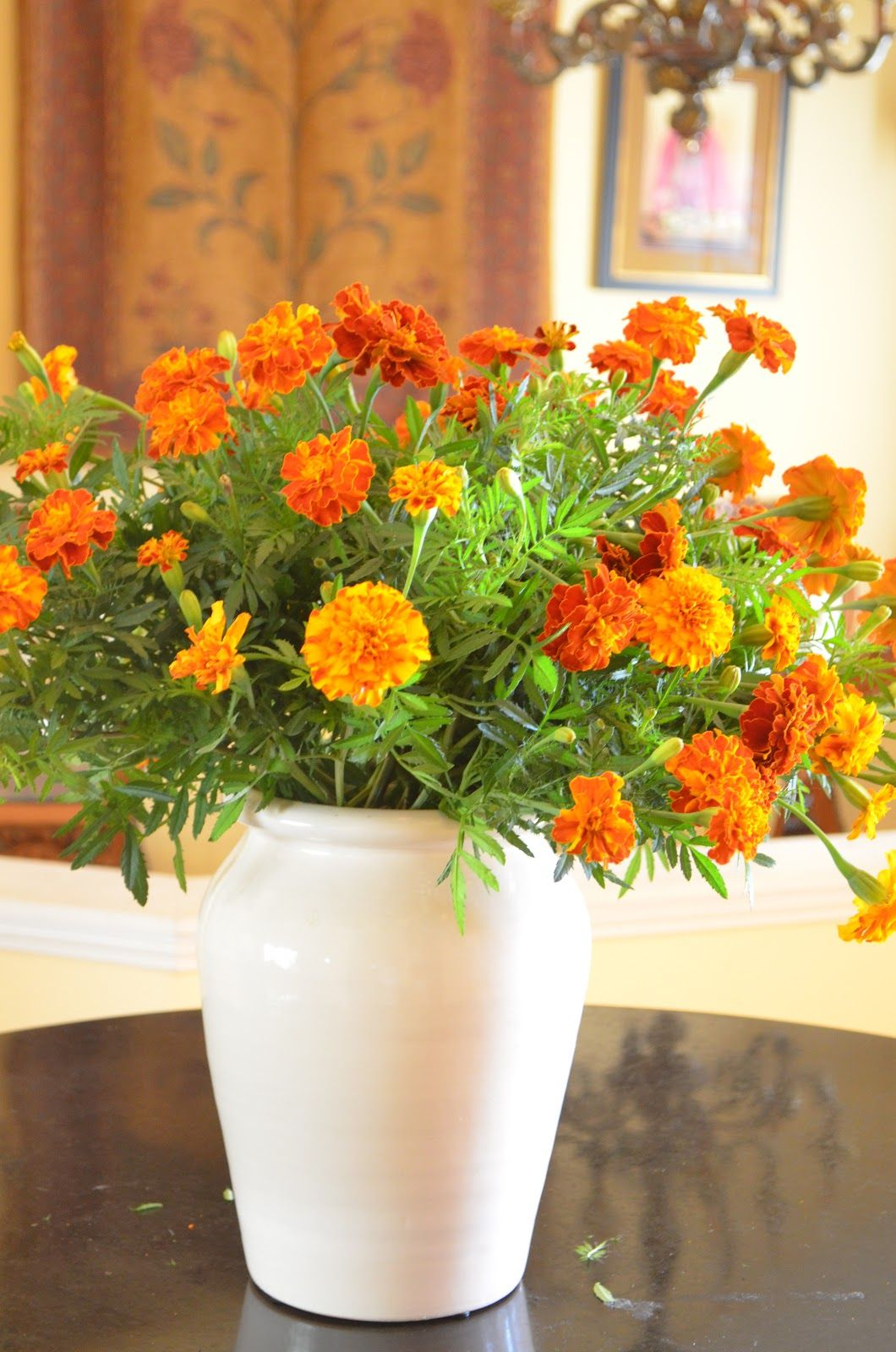Pin by 𝒜𝒥ℳ on Marigold Cottage Marigold, Flower