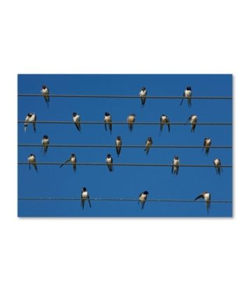 Robert Harding Picture Library 'Small Birds' Canvas Art - 32 x 22 x 2 #smallbirds