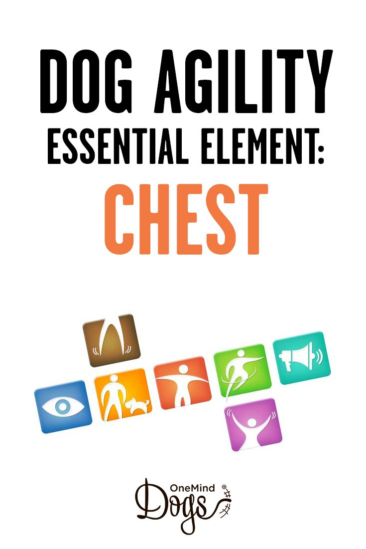 Seven essential elements: chest.  Imagine a laser pen pointing from your chest to the ground about five feet in front of you; this is the point which dogs seek. In many techniques we turn our shoulders so that our chest laser points on to the dog's running line.  While running on the course, the dogs maintain a certain distance to the handler. By turning your chest towards your dog, you can turn your dog's running line closer to your running line.
