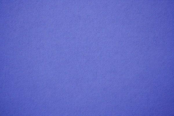 Periwinkle Blue Lavender