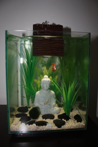 Fluval Chi 25L Betta Tank with Buddha | Fishys | Pinterest ...