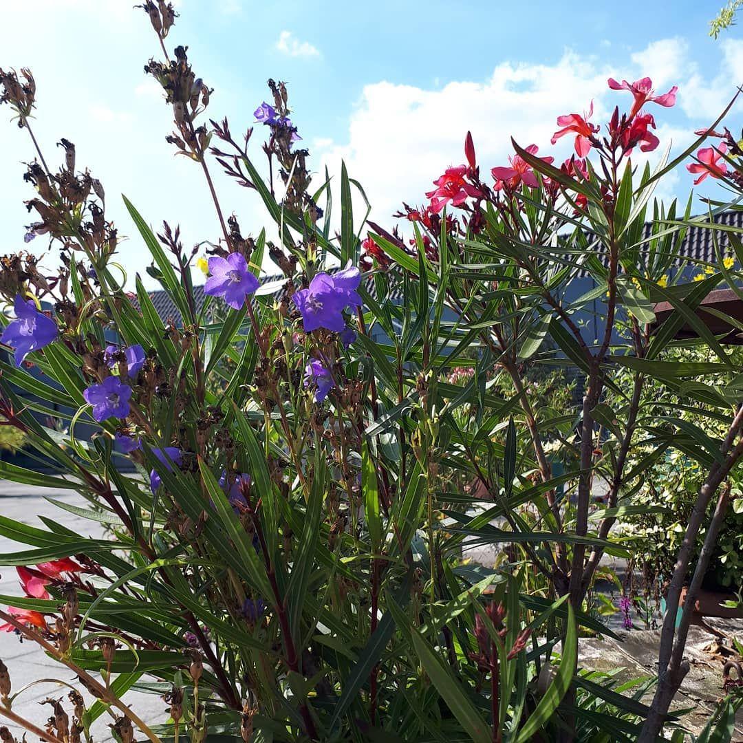 Jeder Tag Ist Ein Neuer Anfang Blume Blumen Cicek Flor Flower Zahra Garten Vorgarten Pflanzen Pflanze Gestalten Strassenblumen Deko Plants Flowers