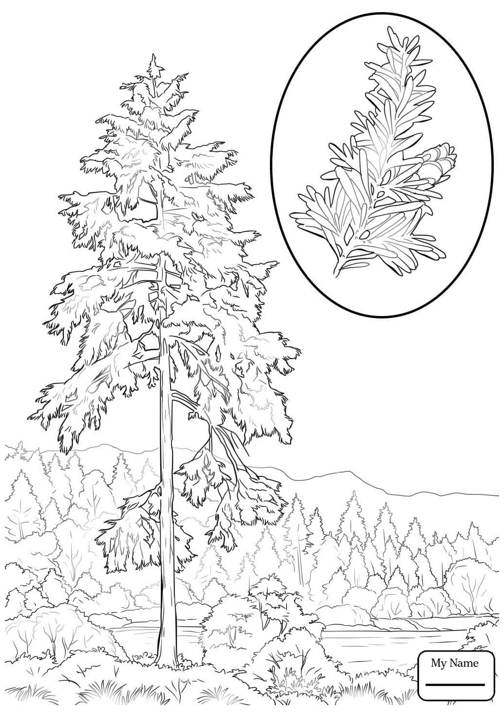Pin By Happykidsactivity On Trees Coloring Collection Tree