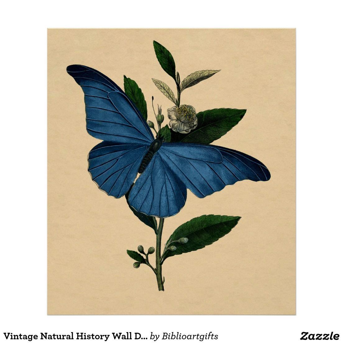 Vintage Natural History Wall Decor Blue Butterfly   Natural history ...