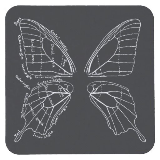 Anatomy Of A Butterfly Wing Vintage Diagram Square Paper Coaster ...