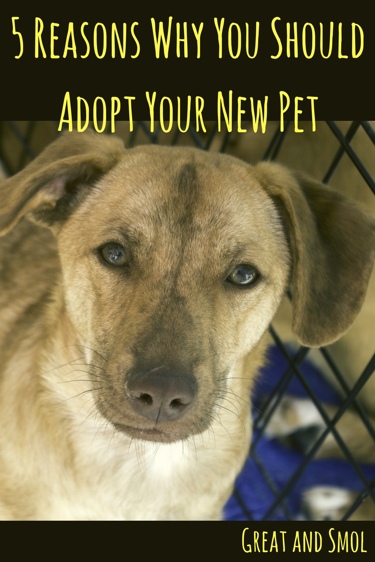 5 Reasons Why You Should Adopt Your New Pet #petadoption