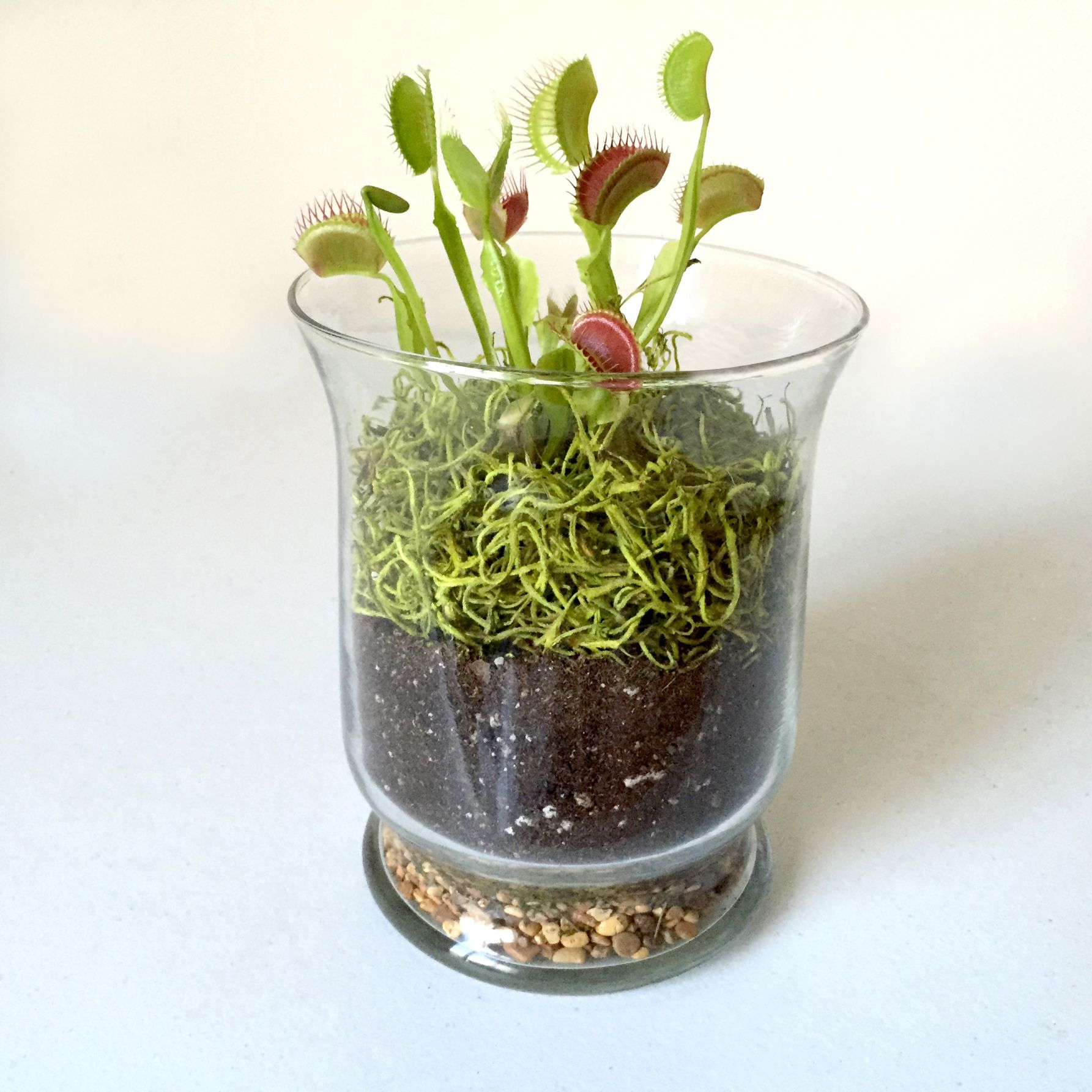 The Venus Flytrap Terrarium Kit ($2197) Includes Everything You Need
