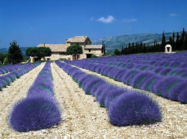 living styles: Provensálsky štýl - Provence Style