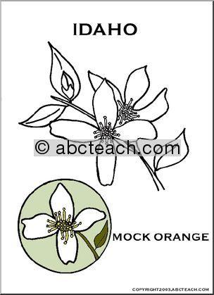 Idaho State Flower Syringa Mock Orange Preview 1 Mock