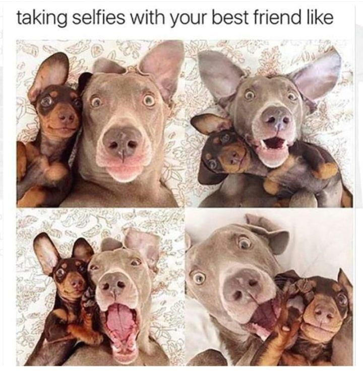 65 Best Funny Friends Memes to Celebrate Best Friends In Our Lives : 65 Funny Fr...