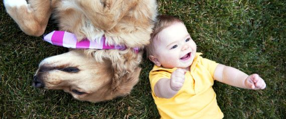 Adorable Video Of These Dogs Babysitting Totally Makes Nannies Redundant!