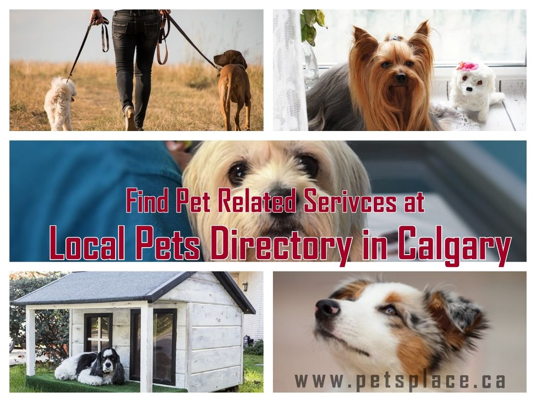 Find All The Pet Services At Local Pets Directory In Calgary Service Animal Find Pets Pets