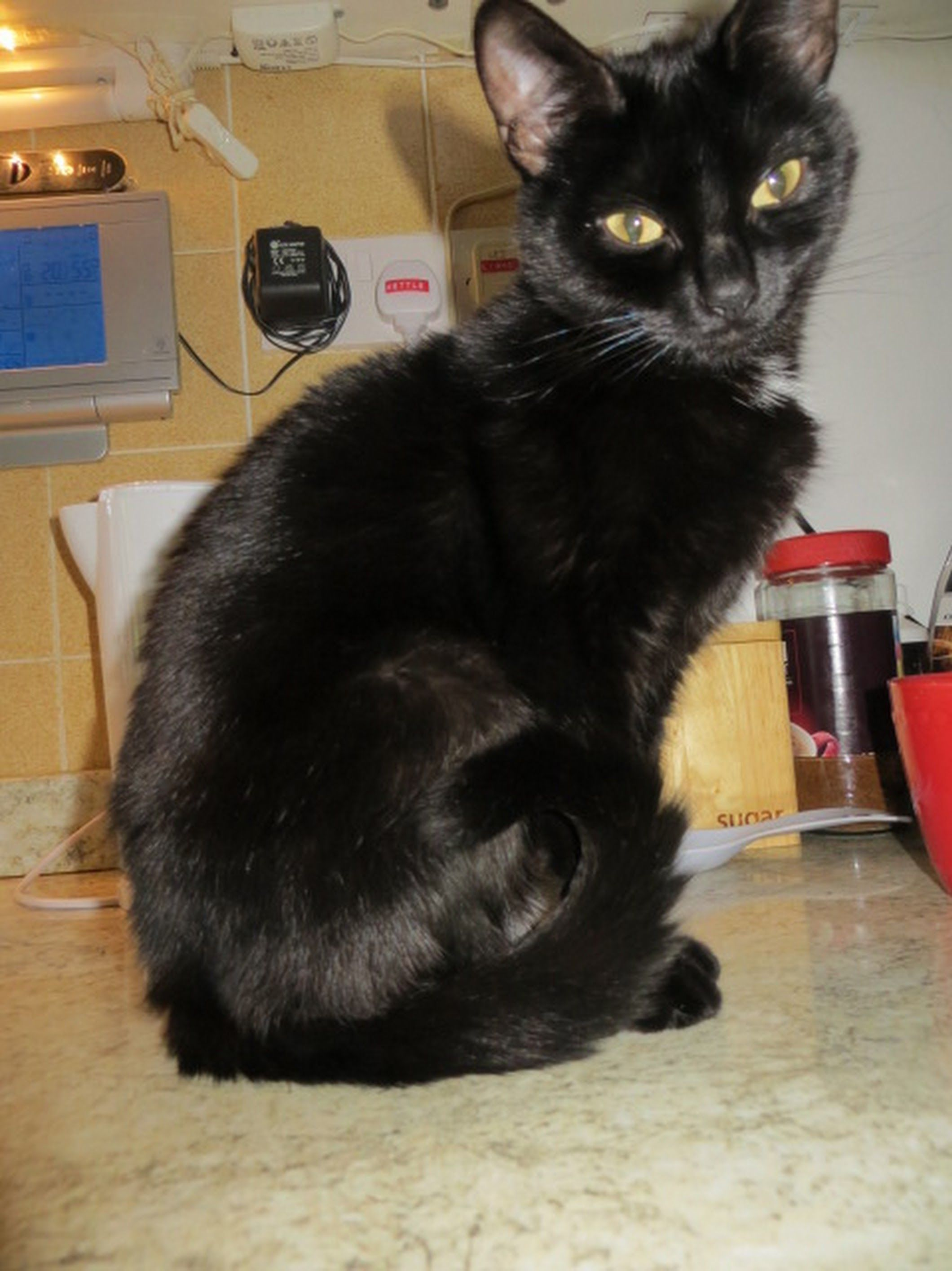 Adopt A Cat Holly Miaow My Name Is Holly And I M A 4 Year