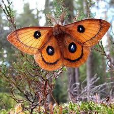 Perhoset Kuvina
