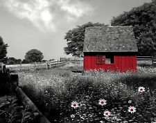 Black White Red Wall Art/Barn/Daisy Flowers/Home Decor Matted Picture