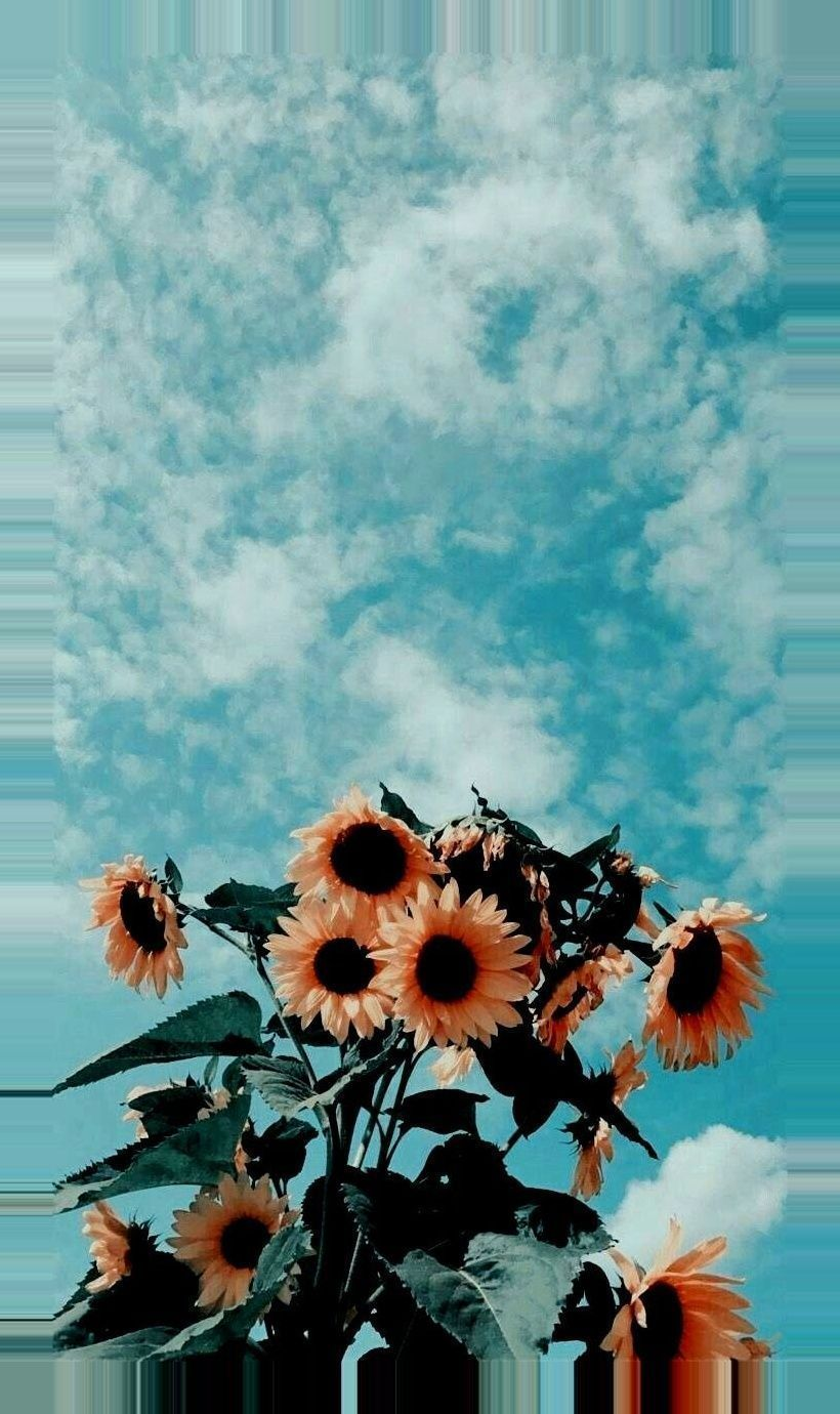 Sunflower wallpaper, Iphone wallpaper ...