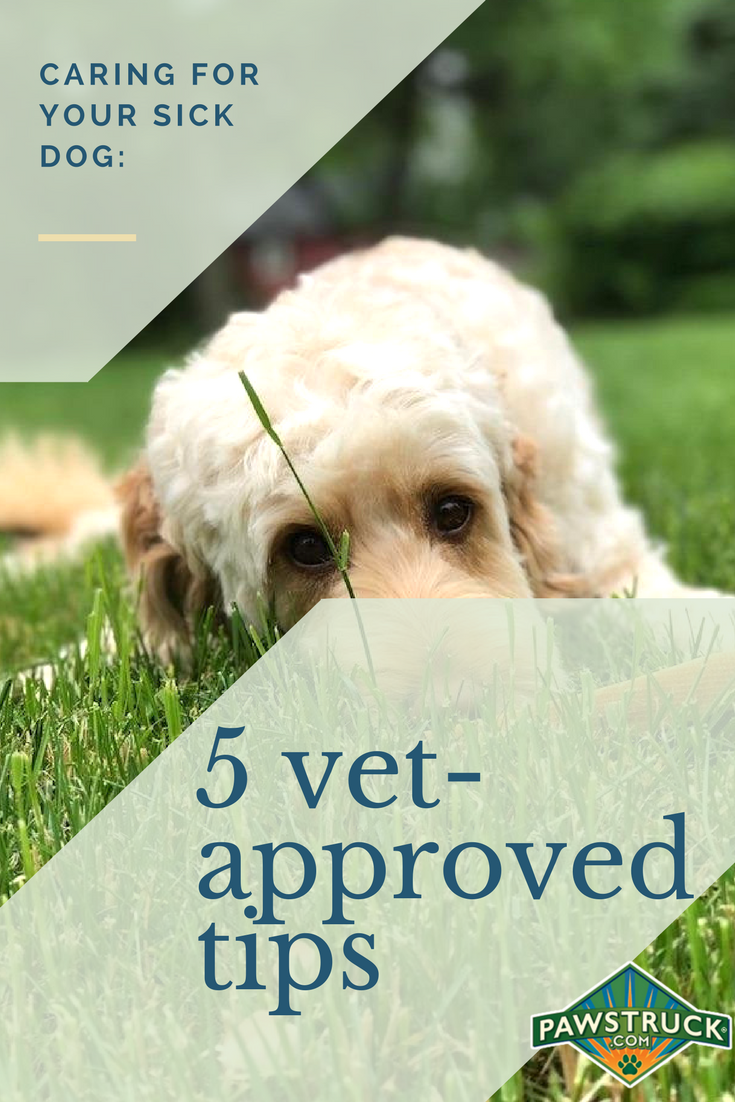 Caring For Your Sick Dog 5 Vet Approved Tips With Images Sick Dog Sick Pets Dog Care