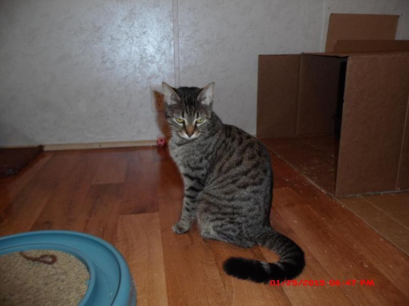 Adopt Addie Lori S Foster On Adoption Mama Cat Foster Mom