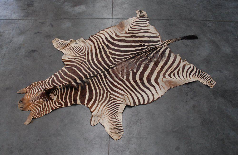 A Real African Zebra Hide Skin Cuz The