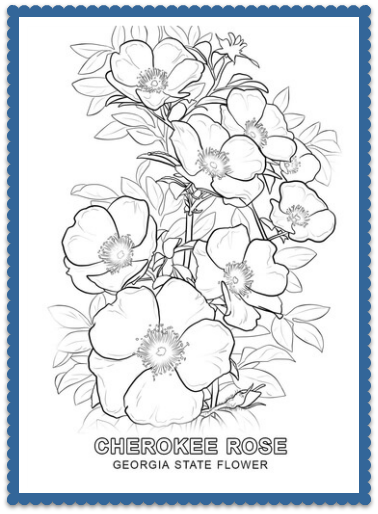 state flower coloring pages. Georgia State Flower  Cherokee Rose by USA Facts for Kids