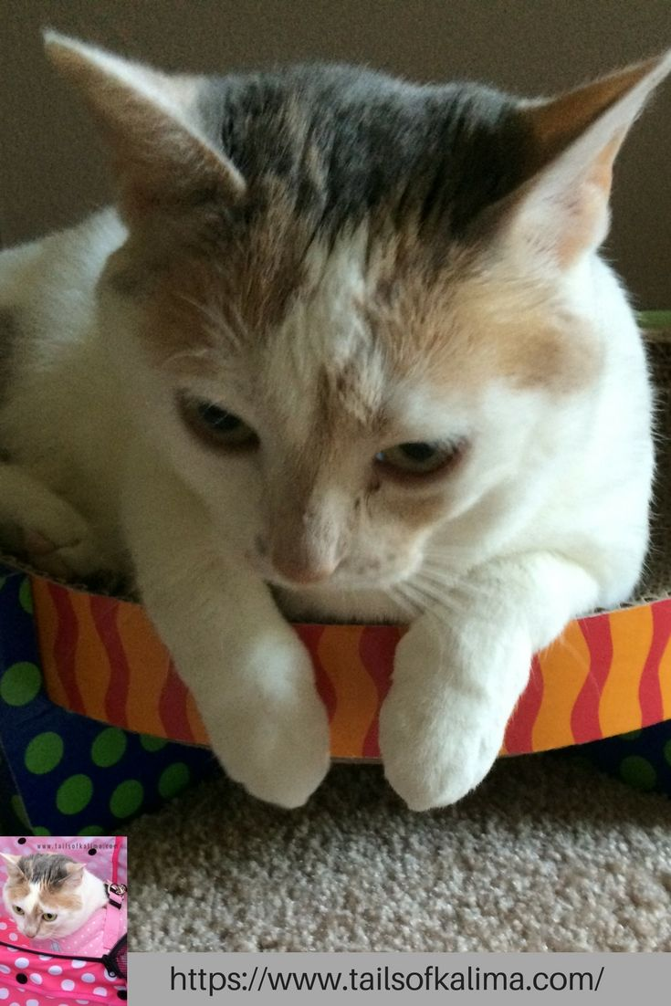 KaliMa the Cat… from Rescue Cat to Therapy Cat Visit our