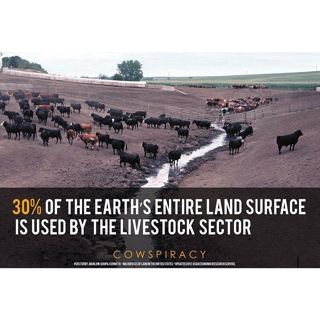 And this is actually a more conservative figure.  Source: http://1.usa.gov/147EaBw  #cowspiracy #livestock #earth #environment #environmental