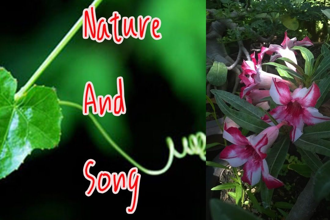 Nature and song makes the world livable No 001