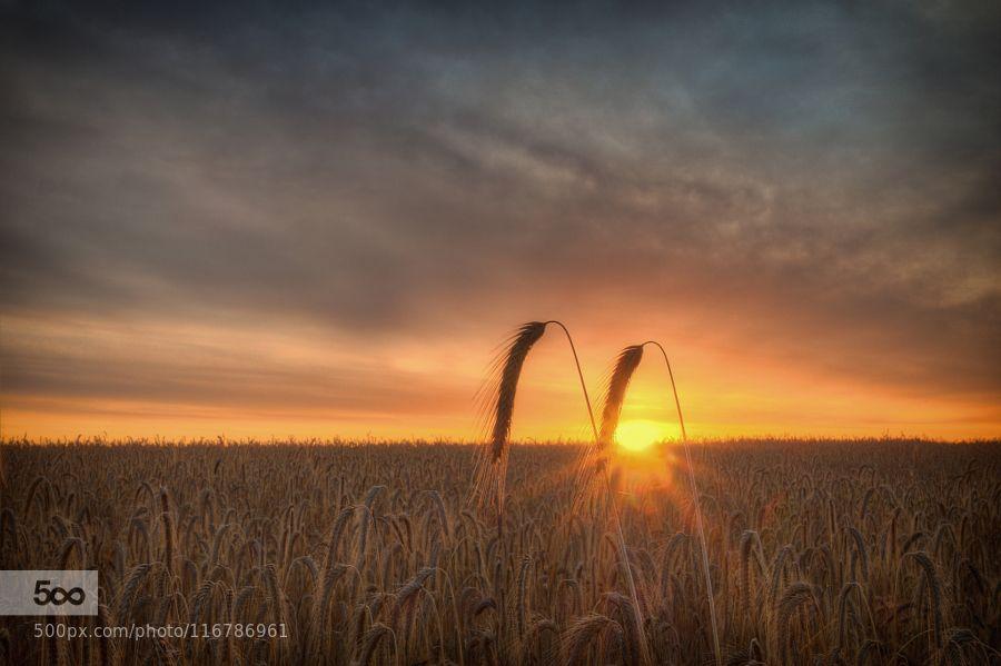 field by fotissima #nature