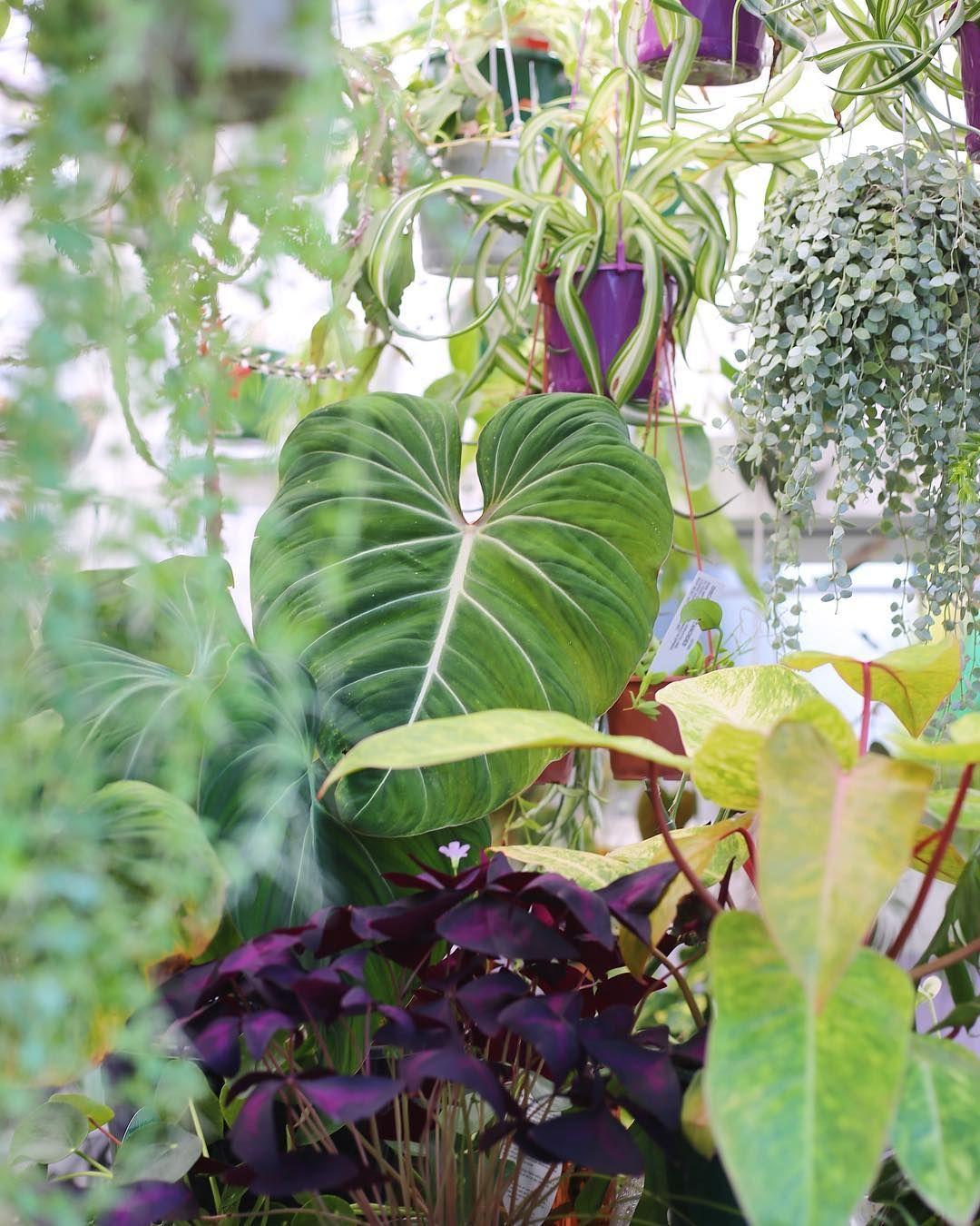 Plantstore plantbypackwood plants i dig pinterest plants