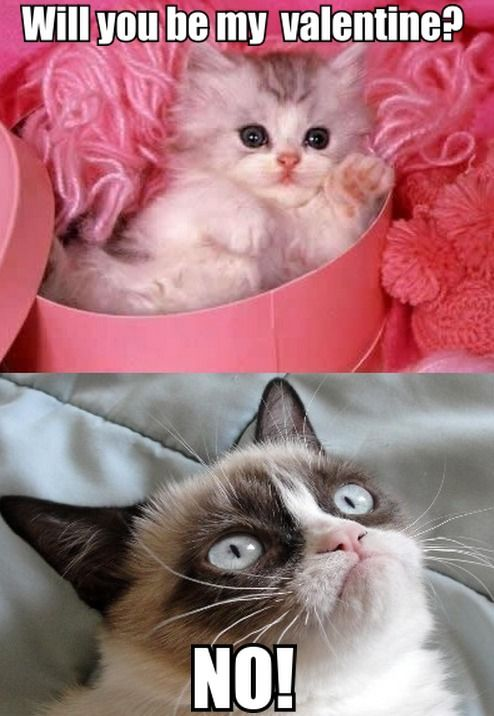 Cute Kitten To Grumpy Cat Will You Be My Valentine