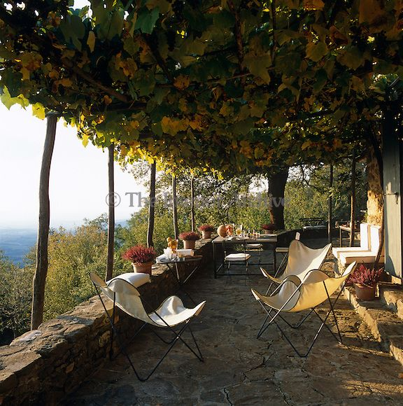 The vine-covered terrace