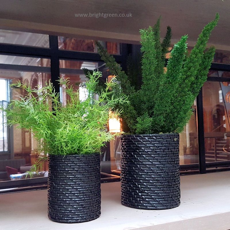 Preserved Foxtail And Sprengerie Ferns In Ceramic Rattan Pots Artificial Plants Outdoor Artificial Garden Plants Artificial Plants Indoor
