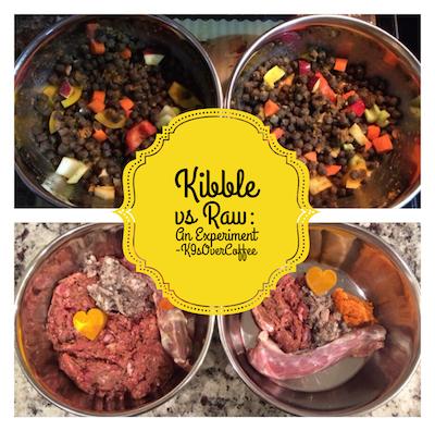 Kibble vs. Raw An Experiment Raw food recipes, Dog food