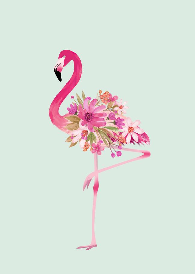 Pin On Flamingo