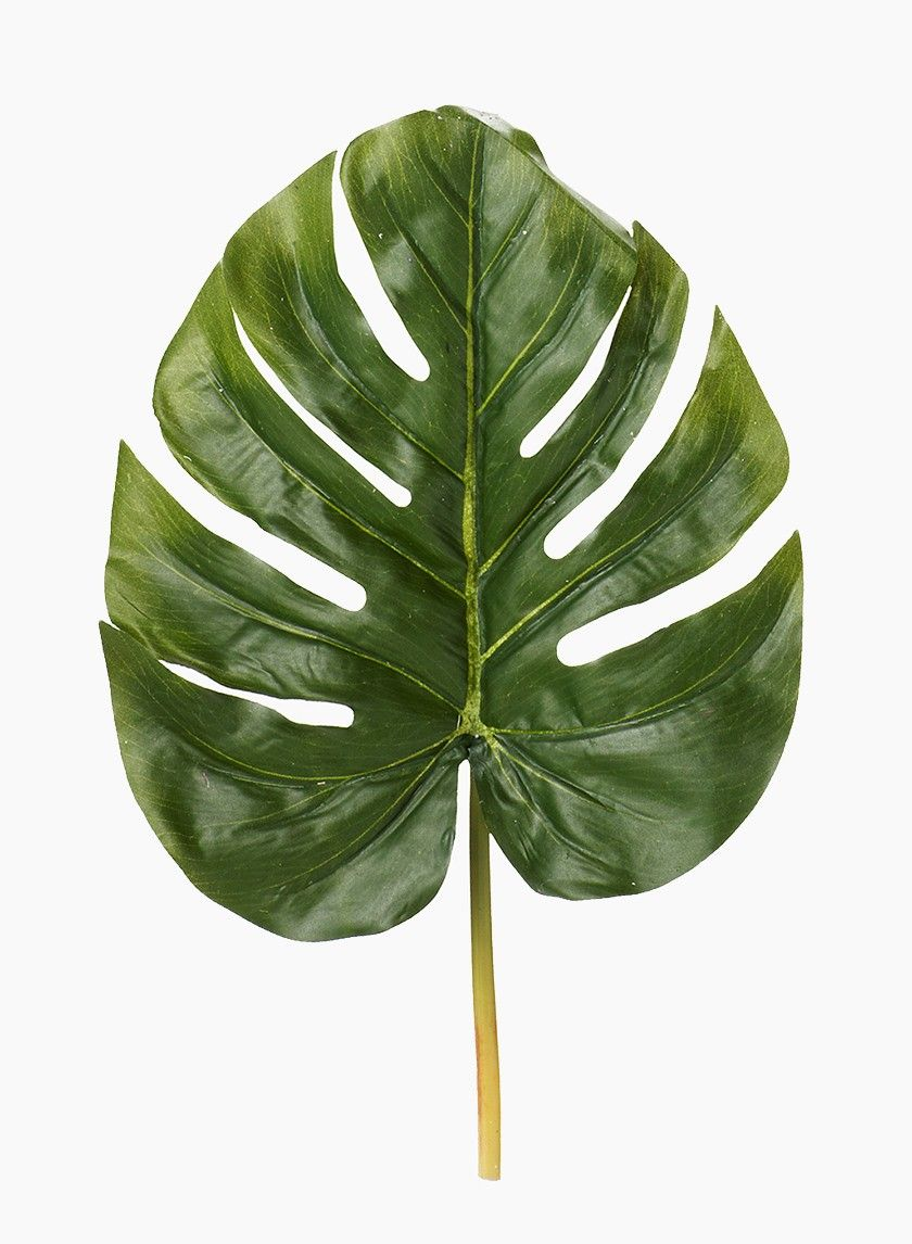 Large Monstera Leaf In 2019 Small Artificial Plants