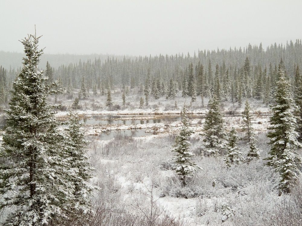 30 best images about Taiga/Boreal Forest- Gardner APES on Pinterest