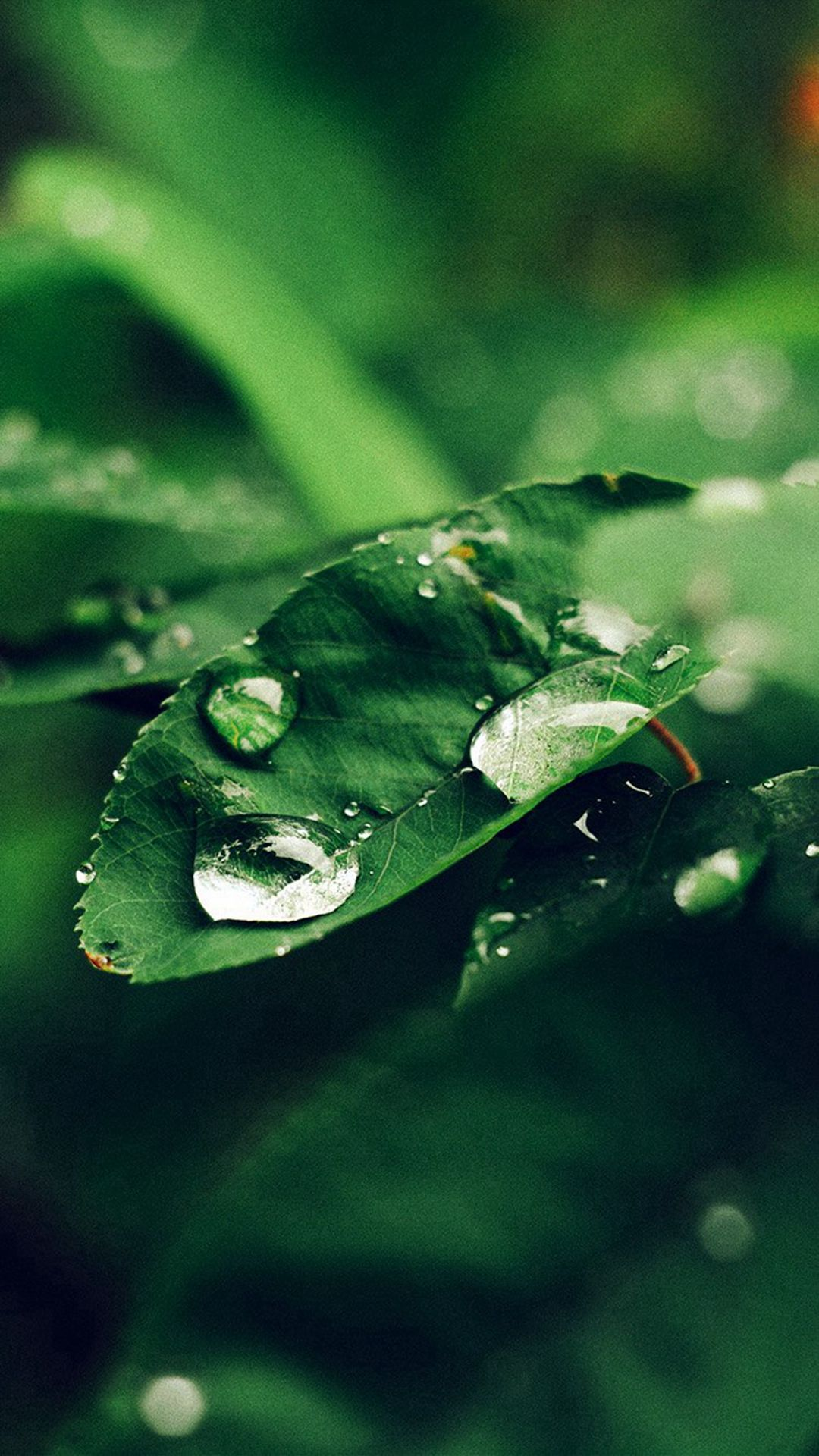 Leaf Rain Green Nature Forest Blue Iphone 6 Wallpaper Green Nature Flower Iphone Wallpaper Best Iphone Wallpapers