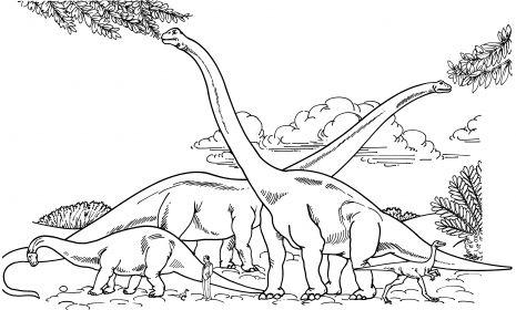 Barosaurus Hypselosaurus Brachiosaurus And Gallimimus Comparison