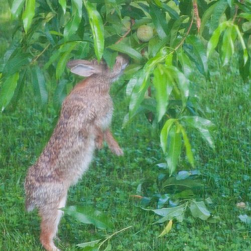 How to keep rabbits out of your garden gardening - How to keep rabbits out of a garden ...