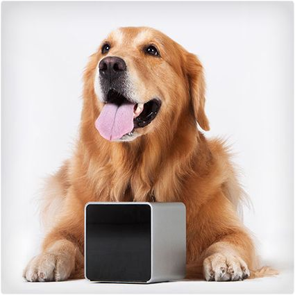 19 Coolest Gadgets & Gizmos for Dogs Pet camera, Dog
