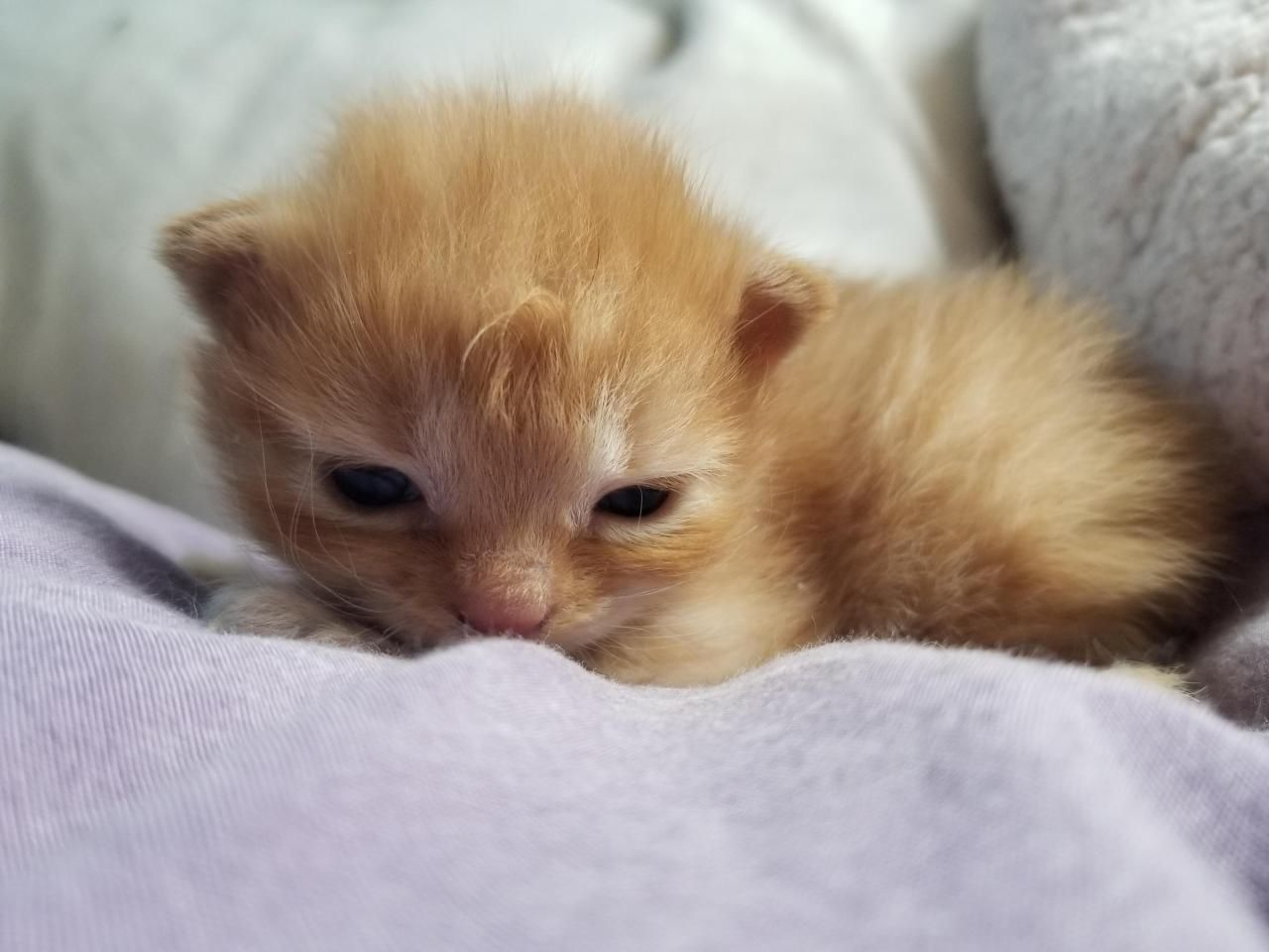 In Case You Haven T Seen A Picture Of A Sleepy 2 Week Old Kitten