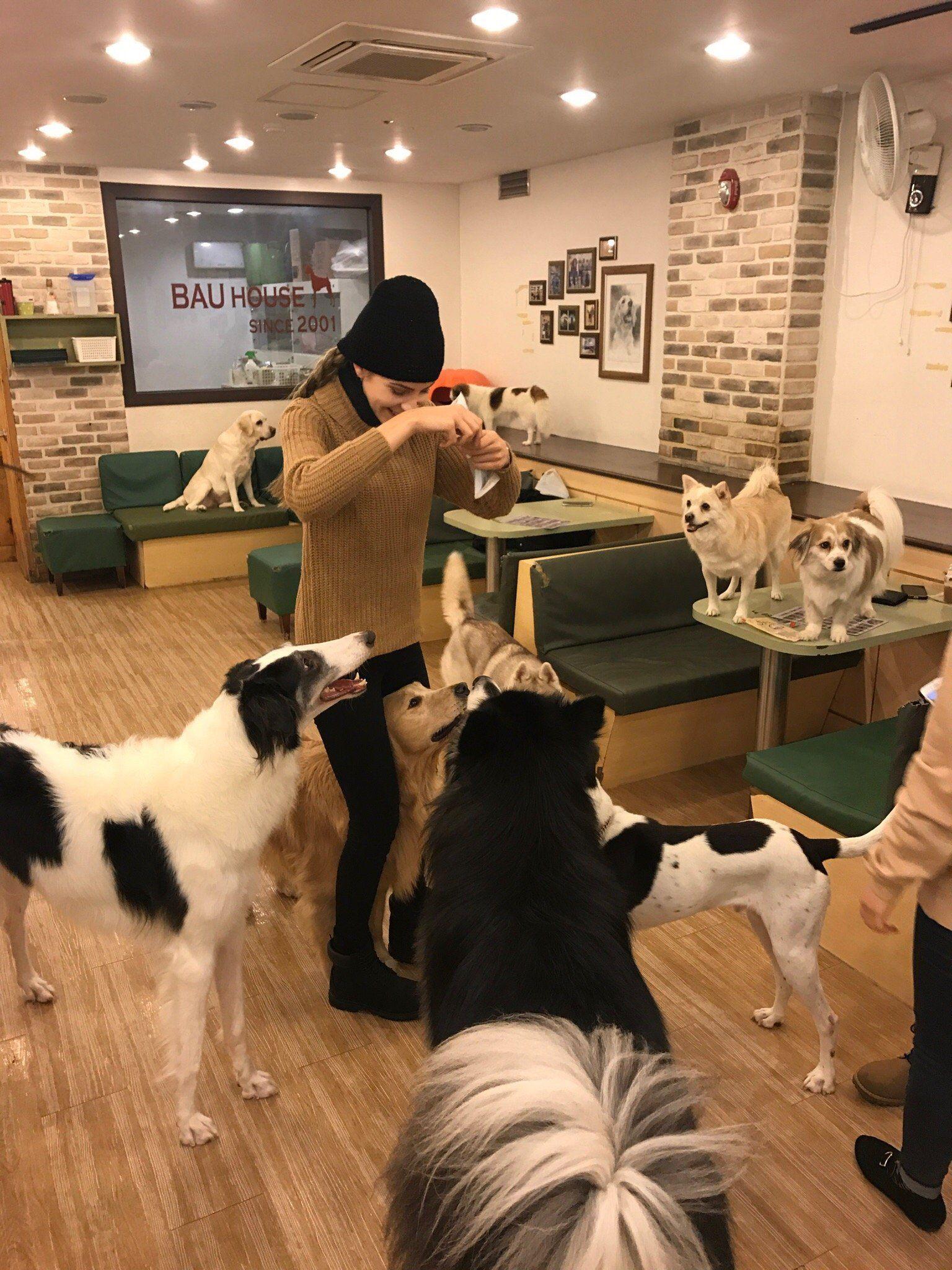 Bau House Dog Cafe Pet Cafe Dog Playground