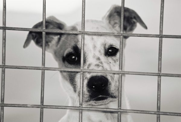 Michigan: Look at the long list of Kill shelters, and ...