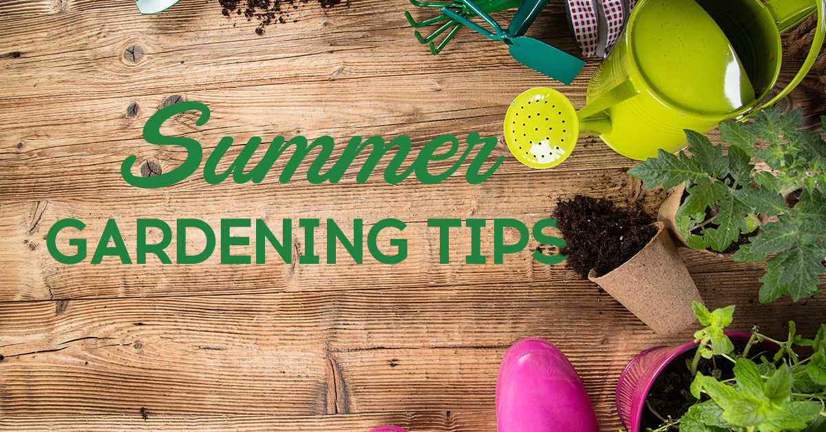 Summer weather can be tough on gardens. Check out these summer ...